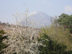 Blossom and sun on mountain