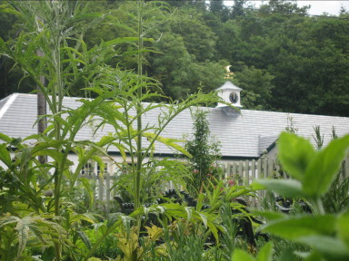 Finch Cottage - View from the potager - larger image